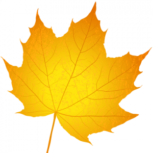 yellow-maple-leaf-2