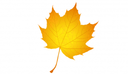 yellow-maple-leaf-3