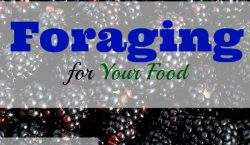 Foraging, foraging for food, free food, food in the woods