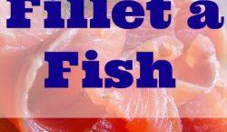 fillet a fish, salmon fillet, fillet, fish, how to fillet