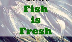 fresh fish, fish market, live catch, fish, salmon, halibut, sea bass