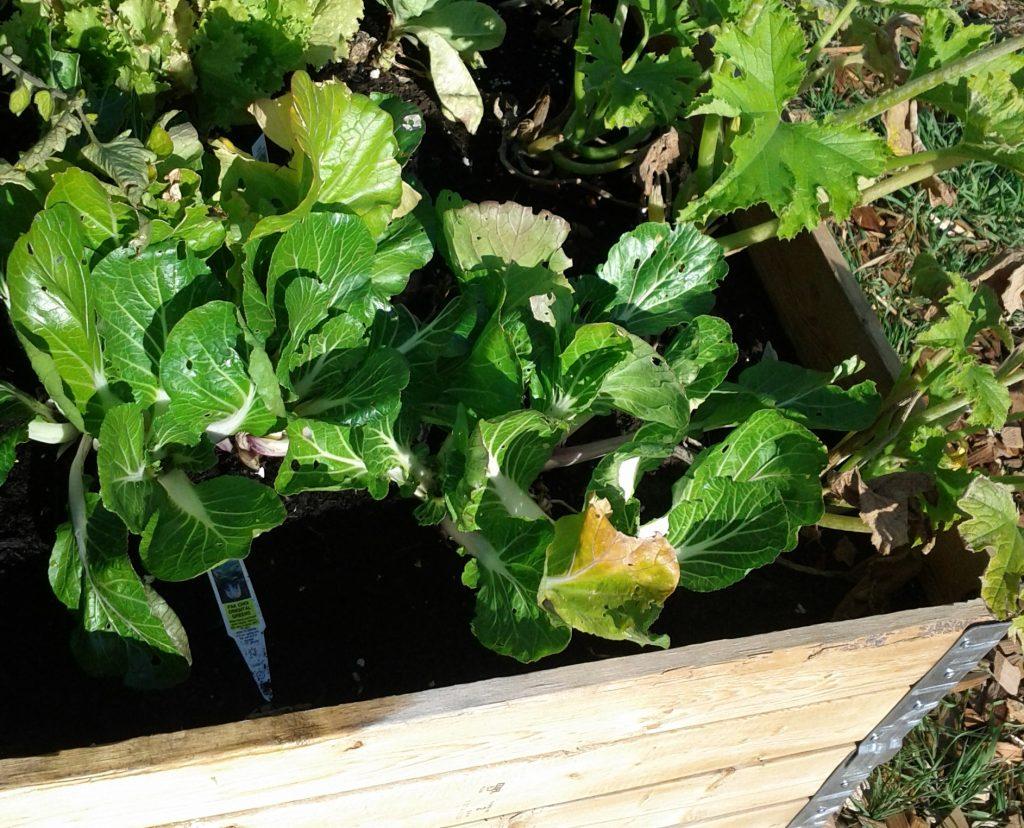 Our 2012 vegetable garden