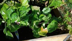 Garden recap, Vegetable Garden, grow your own, vegetables, gardening, community planting
