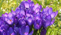 spring fever, spring break, personal finance blogs, personal finance posts, financial articles, financial blogs