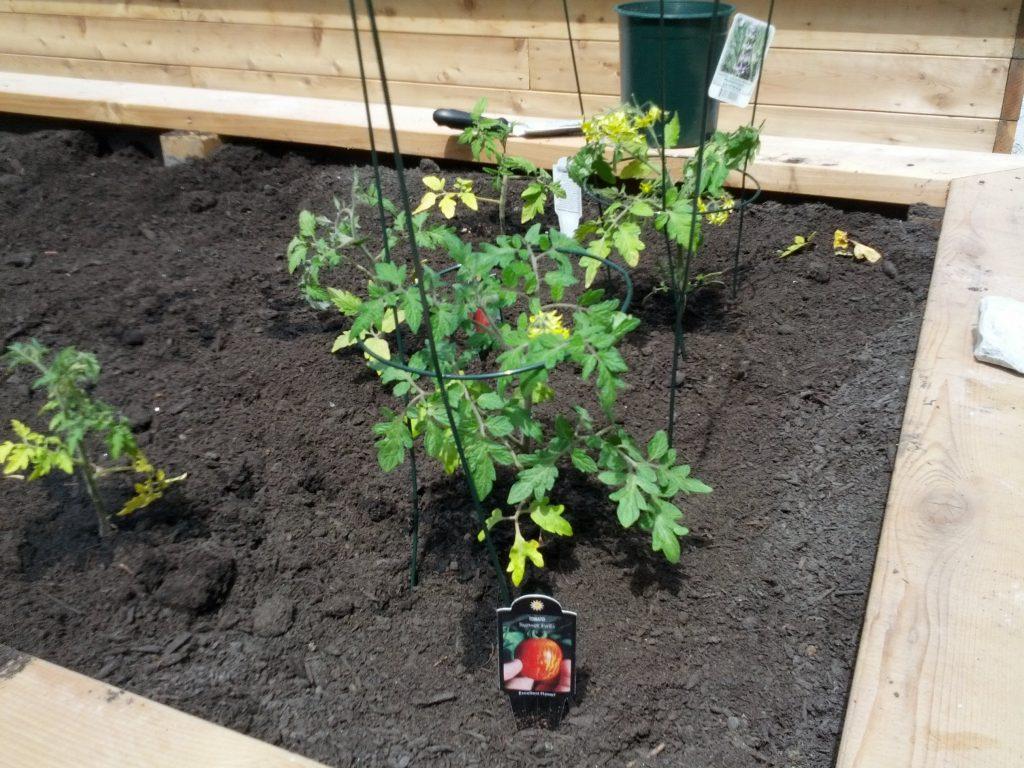 new community garden