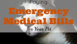 pet medical bill, emergency pet bill, pet expenses, taking care of your pet, pet hospitalization, emergency medical bill for your pet