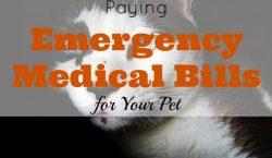 pet medical bill, emergency pet bill, pet expenses, taking care of your pet, pet hospitalization, emergency medical bill for your pet